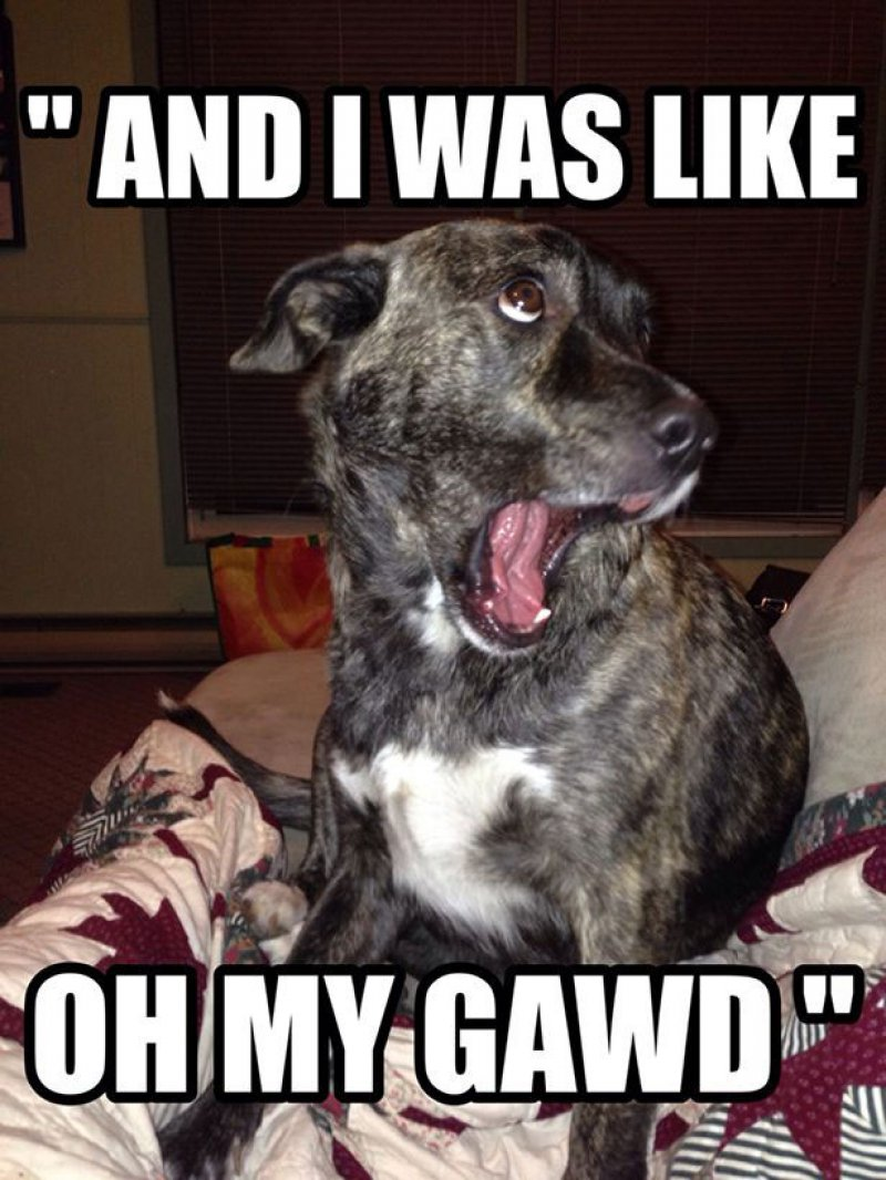 Oh My Gawd! -12 Funny Dog Memes That Will Make You Lol