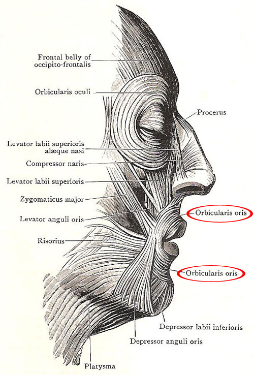 Orbicularis Oris-15 Mind Blowing Facts About Kissing