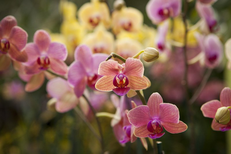Orchids-12 Most Beautiful Flowers In The World