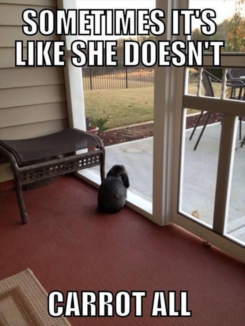 Sometimes It's Like She Doesn't Carrot All-12 Hilarious Animal Puns That Will Make You Lol