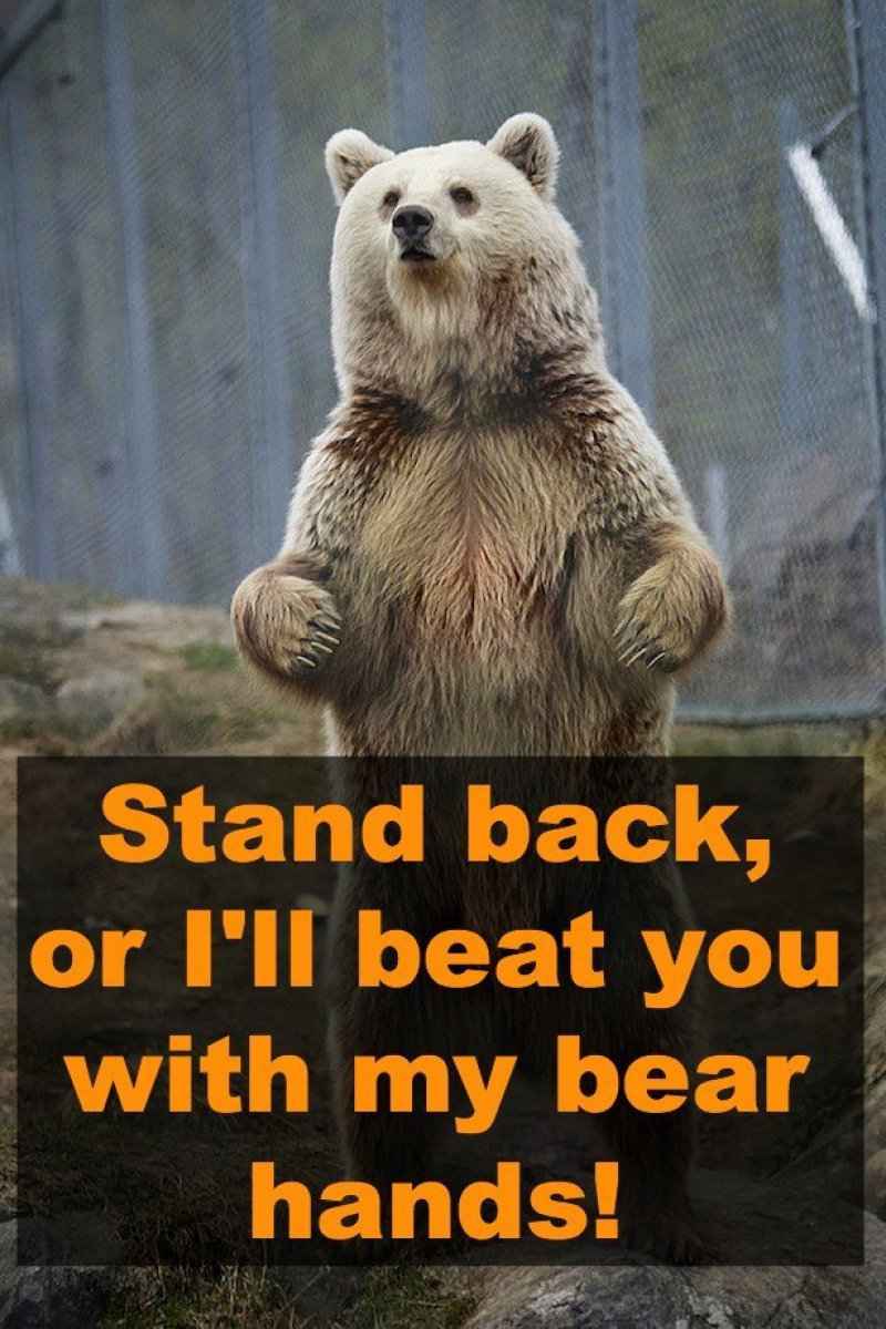 Stand Back, Or I'll Beat You With My Bear Hands-12 Hilarious Animal Puns That Will Make You Lol