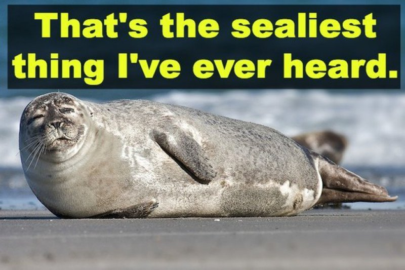 That's The Sealiest Thing I Have Ever Heard-12 Hilarious Animal Puns That Will Make You Lol