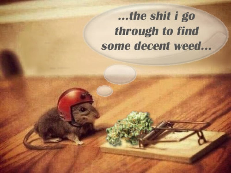 The Shit I Go Through To Find Some Good Weed-12 Funny Weed Memes That Are Sure To Get Your Sense Of Humor High