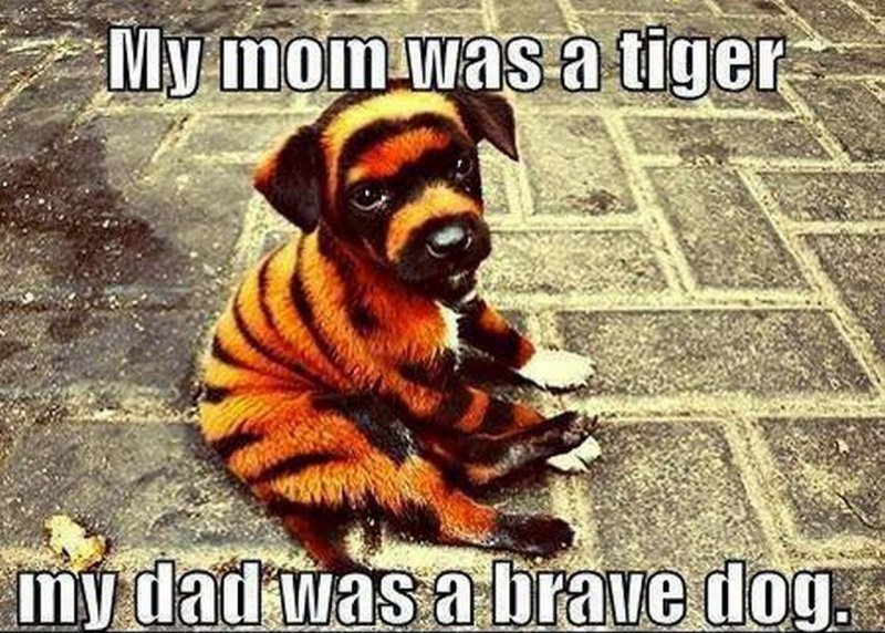 The Son Of A Brave Dog-12 Funny Dog Memes That Will Make You Lol