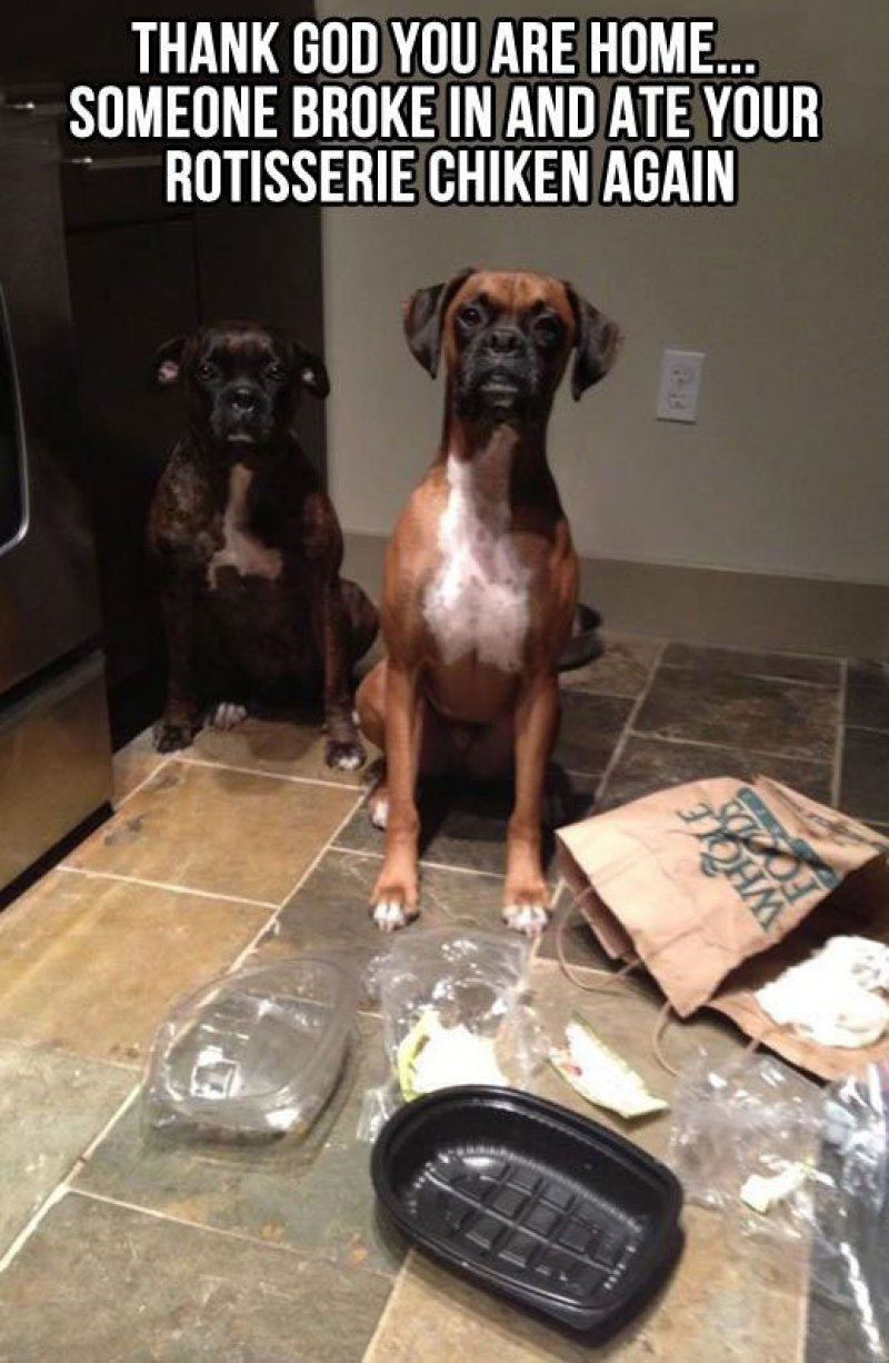 These Two Food Stealers-12 Funny Dog Memes That Will Make You Lol