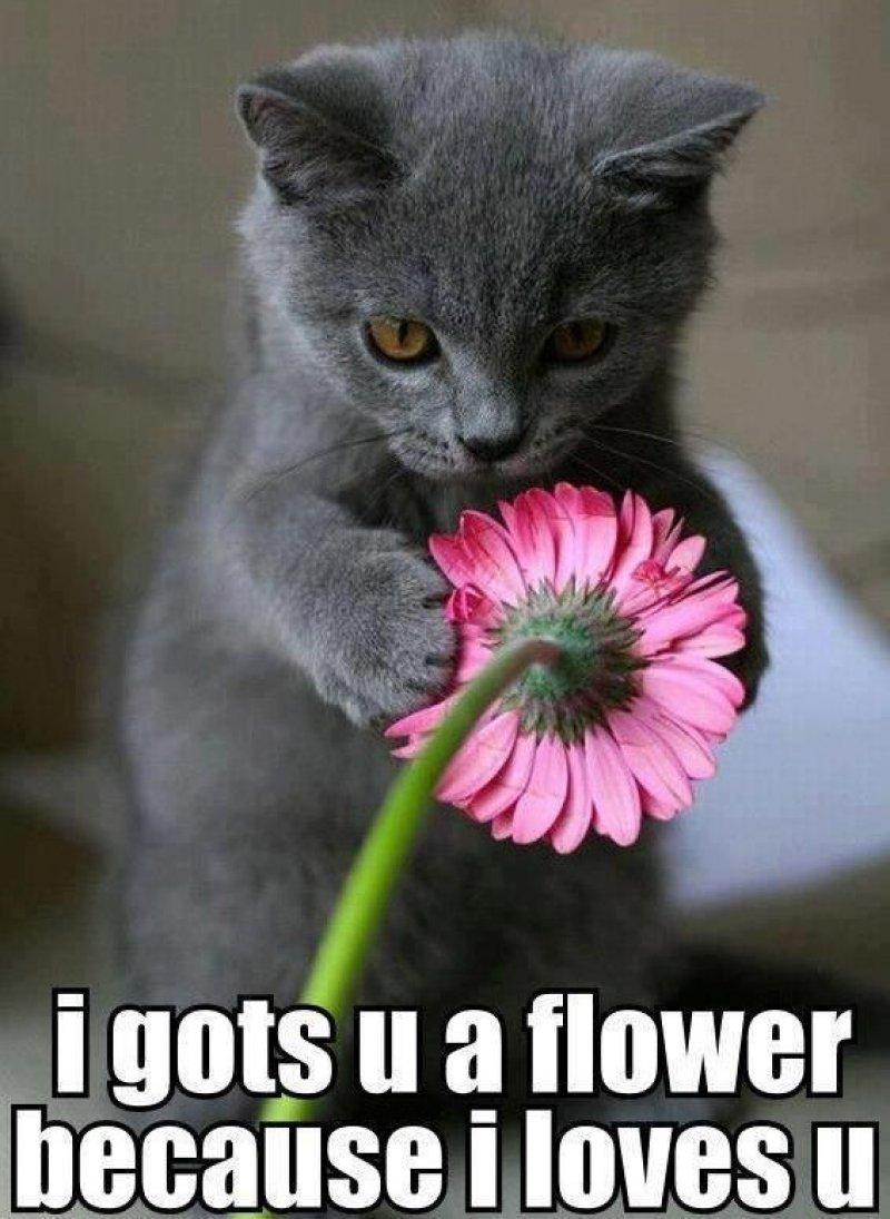 This Adorable Love Meme-12 Beautiful Yet Hilarious Love Memes