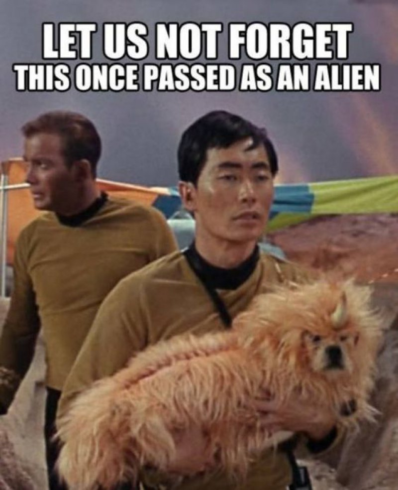 This Alien Dog!-12 Funny Star Trek Memes That Are Make Your Day