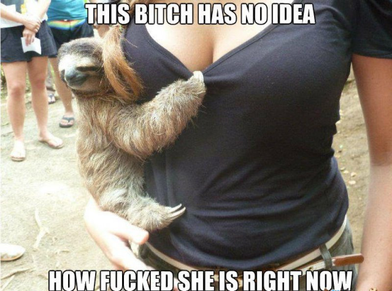 This Bitch Has No Idea!-12 Funny Rape Sloth Memes That Will Make You Lol