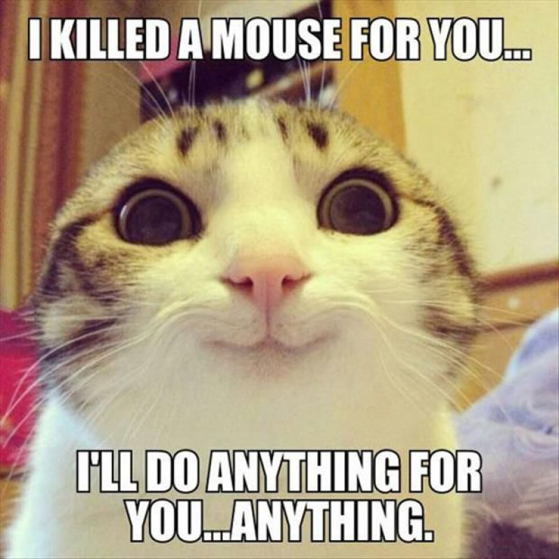 This Cute Cat!-12 Hilarious Animal Memes That Will Make Lol