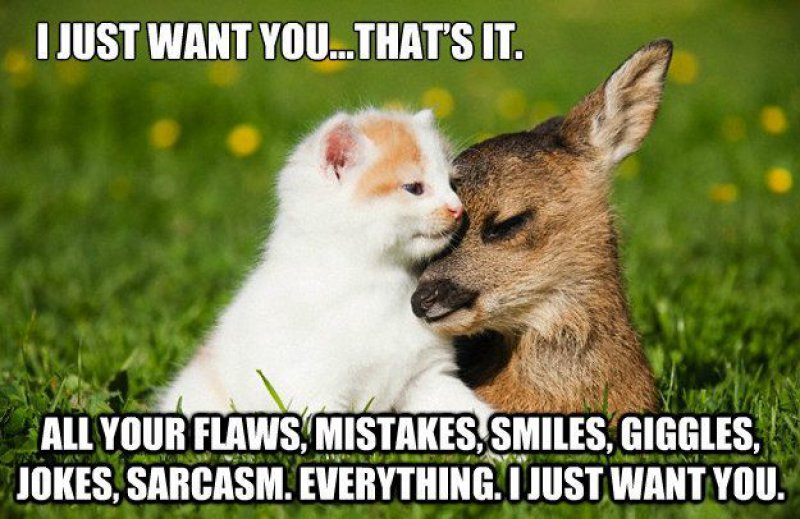 This Cute Love Meme-12 Beautiful Yet Hilarious Love Memes