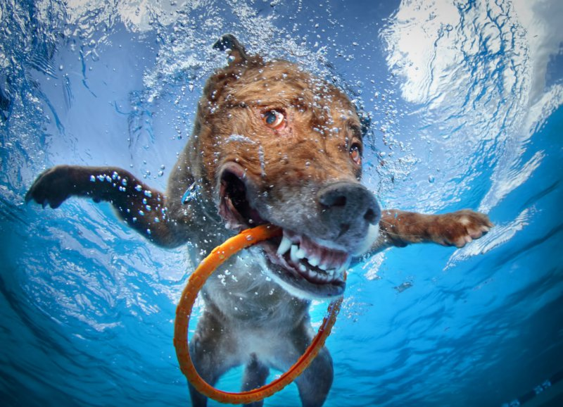 This Dog That Has Caught A Frisbee Ring Underwater-13 Awesome Pictures That Will Make Your Day