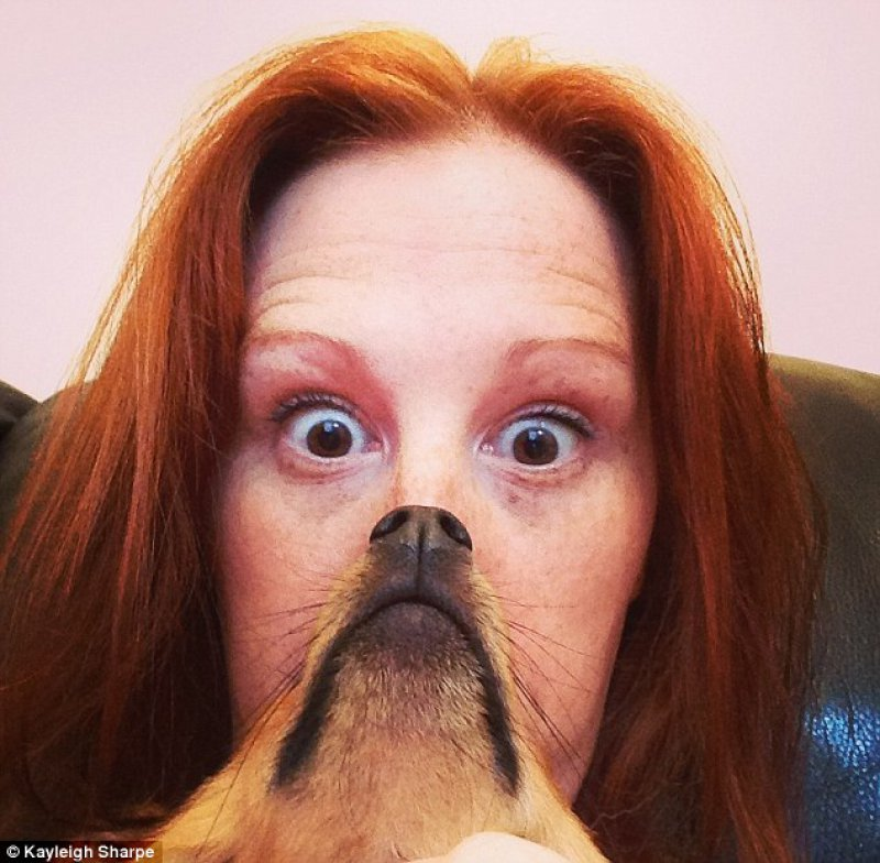 This Funny Dog Beard Picture -15 Epic Dog Beards That Will Make You Want To Have One