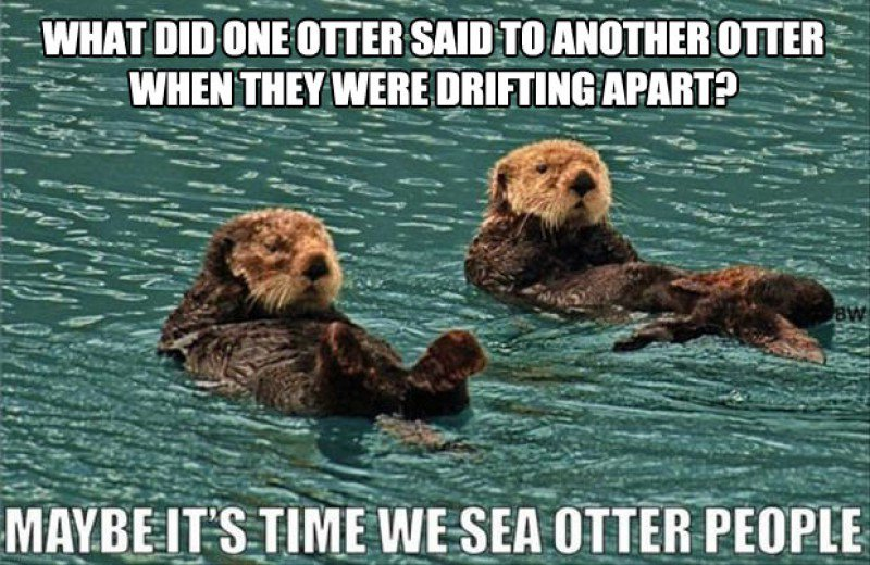 This Funny Sea Otters Joke-15 Terrible Jokes That Are Actually Funny