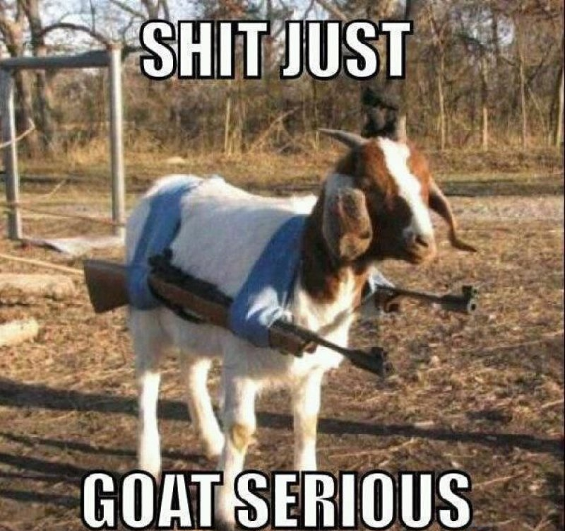 This Goat With Guns-12 Hilarious Animal Memes That Will Make Lol