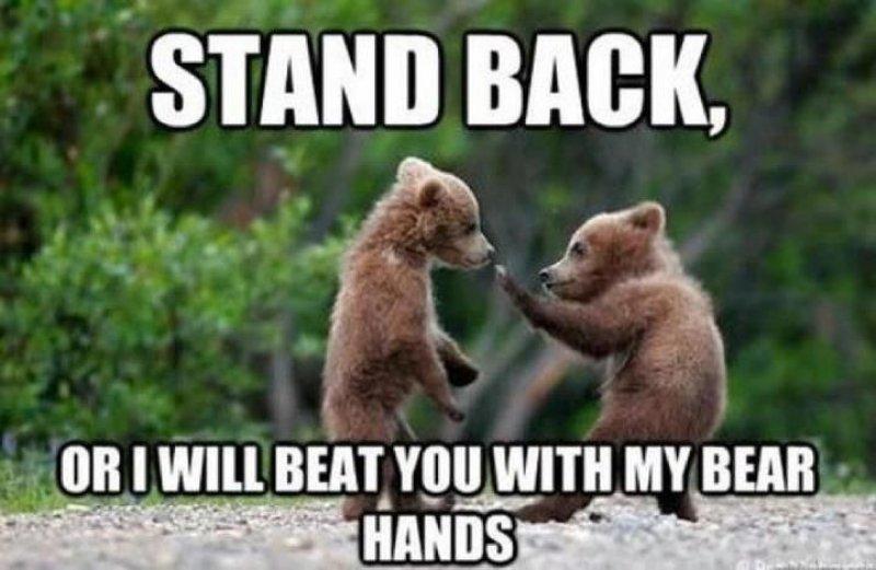 This Kungfu Panda!-12 Hilarious Bear Puns That Will Make You Cry