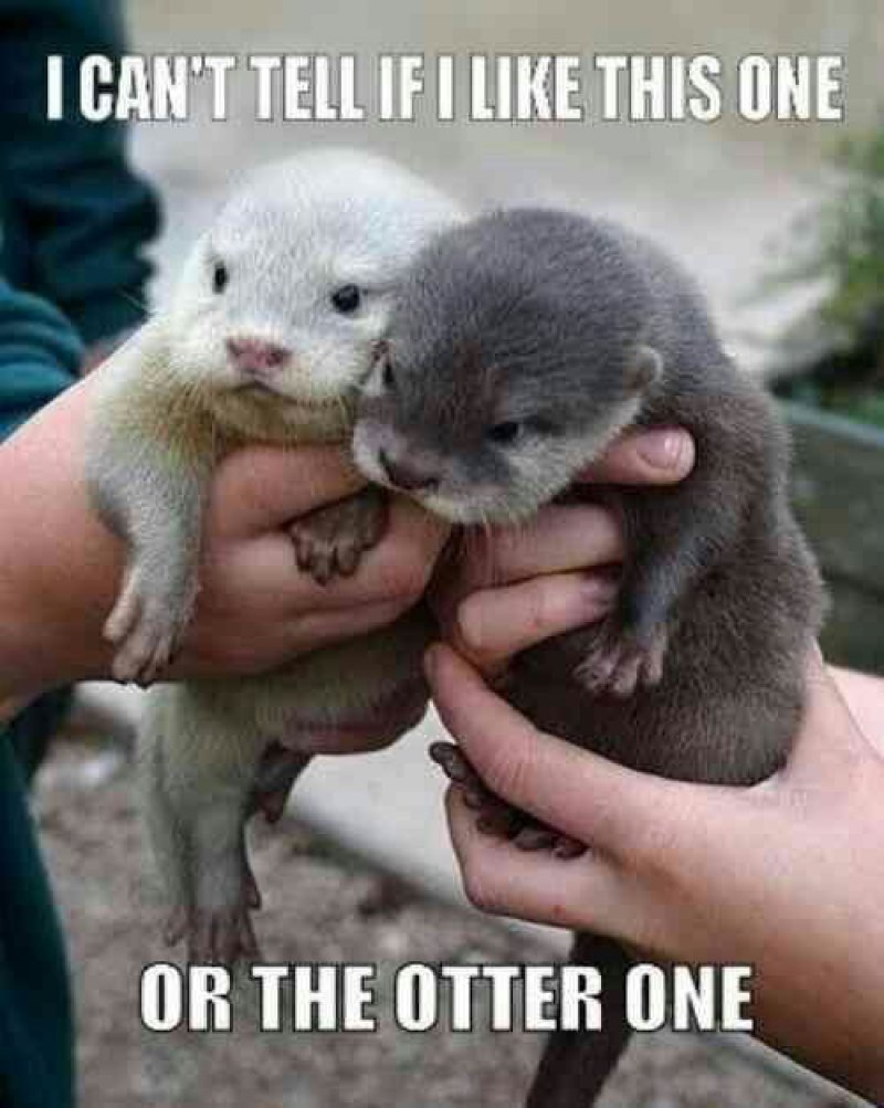 This One Or The Otter One-12 Hilarious Animal Puns That Will Make You Lol
