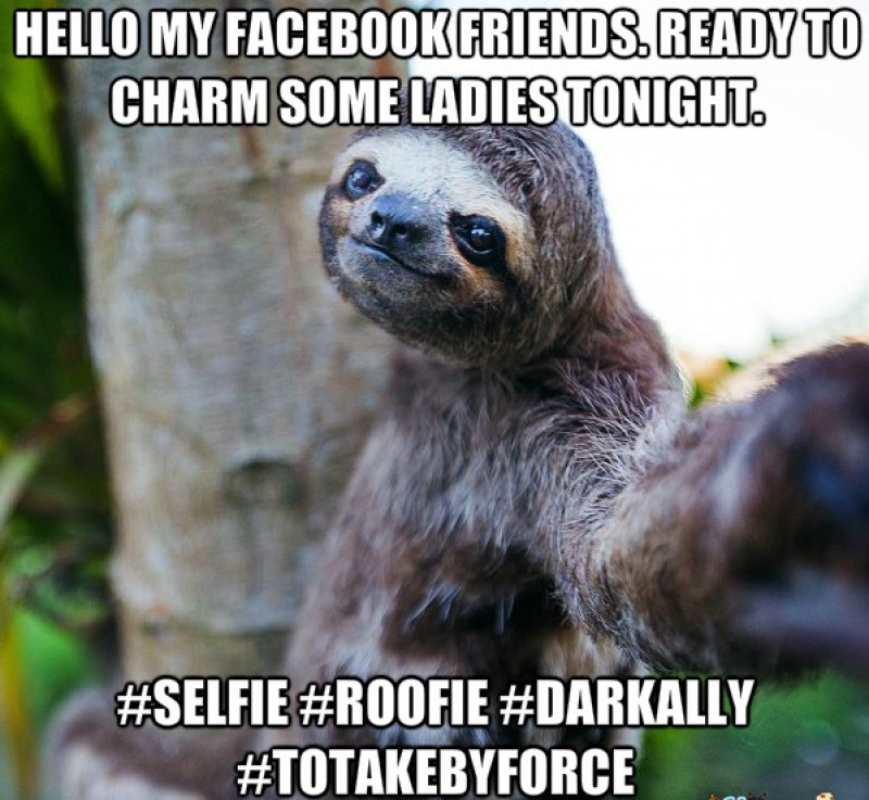 This Sloth Selfie-12 Funny Rape Sloth Memes That Will Make You Lol