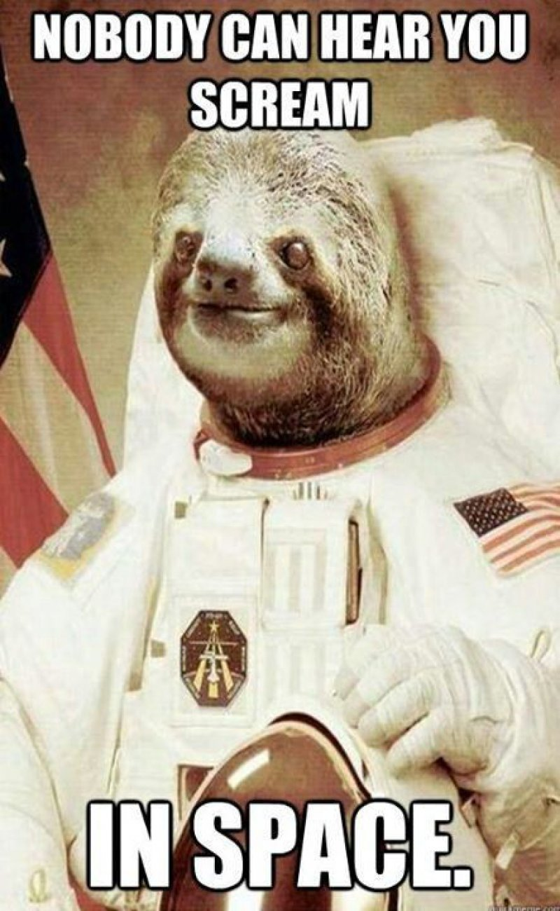 This Space Sloth-12 Funny Rape Sloth Memes That Will Make You Lol