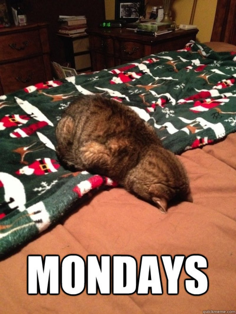Funny Cat Meme About Work : Funny monday memes that will brighten your