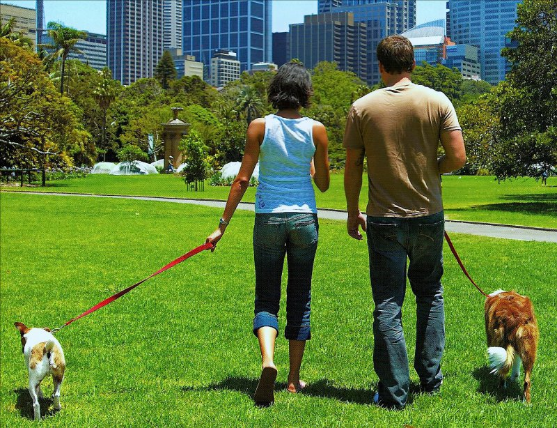 Walk The Dog-15 Easy Ways To Get Slim Fast And Efficiently