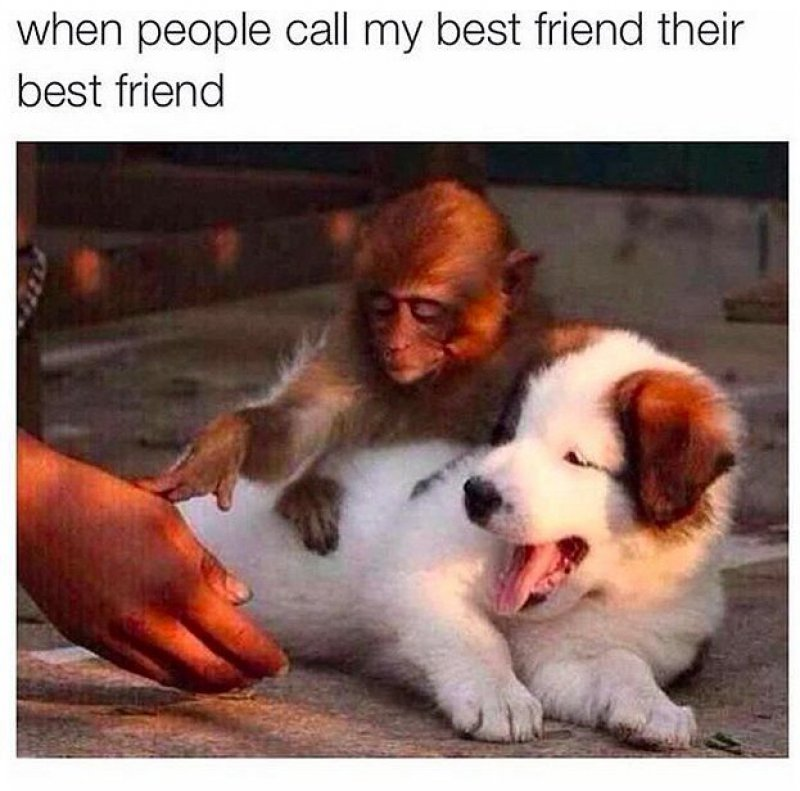 When People Call My Best Friend Their Friend!-12 Best Friend Memes That Will Make You Say So Us