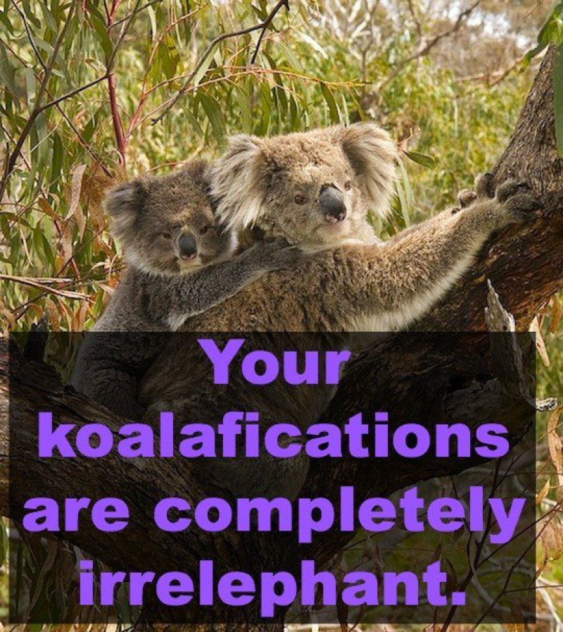 Your Koalafications Are Completely Irrelephant-12 Hilarious Animal Puns That Will Make You Lol