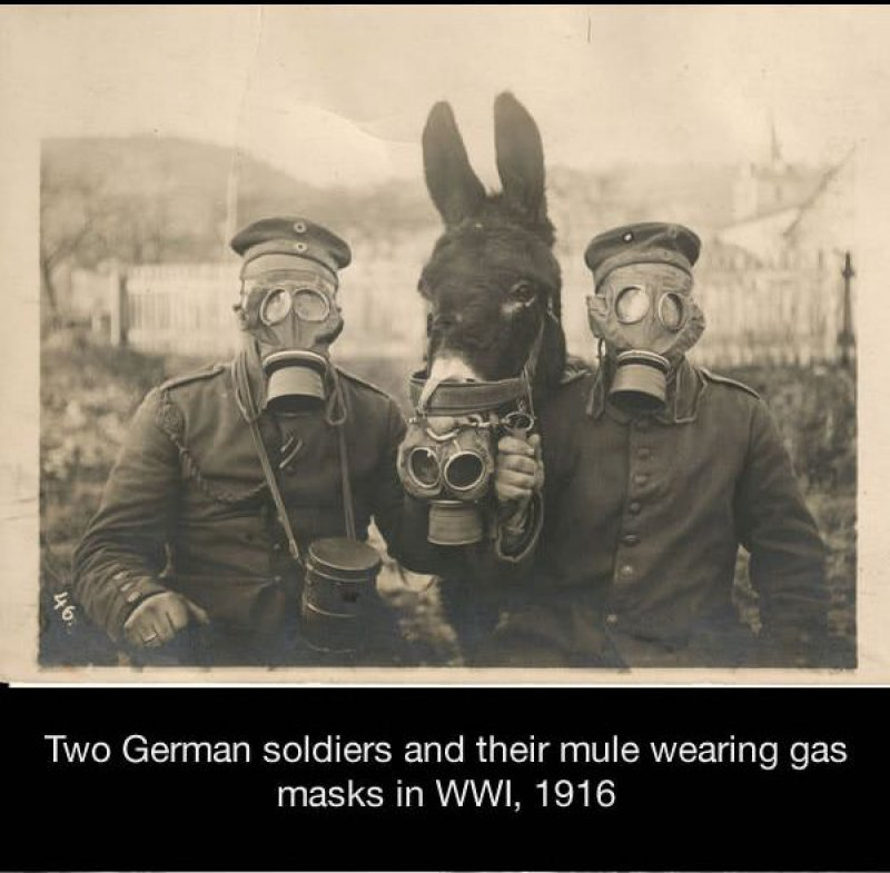Picture of Soldiers and Their Mule Wearing a Gas Mask-15 Historical Pictures That Are Really Shocking