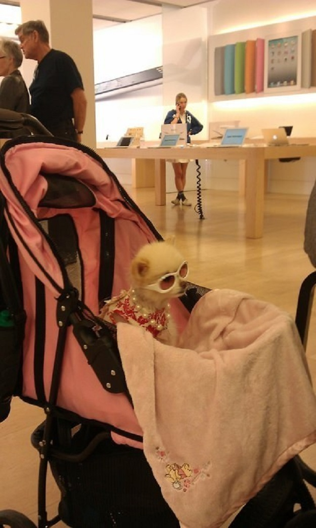 This Cool Girl-15 Hilarious Things Ever Happened In Apple Stores