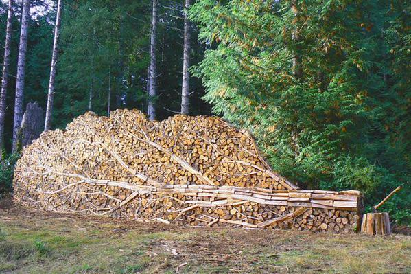 Not a Tree, But Firewood-15 Photos That Show The Order In The World