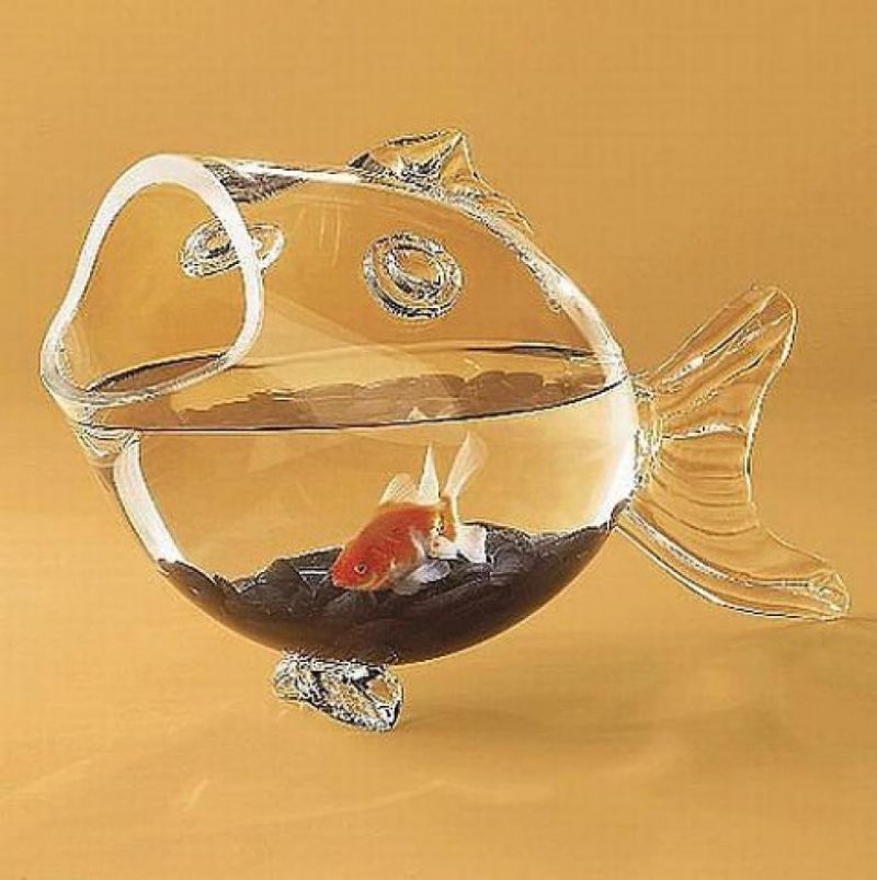 Fish shaped bowl 36 strangest gadgets that you can buy for Legal fish bowl