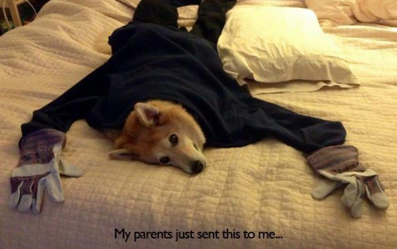 Creative and Funny Parents-15 Times Parents Showed Their Inner Child