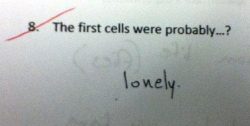 This Funny Answer-15 Troll Kids That Are Sure To Make You Laugh