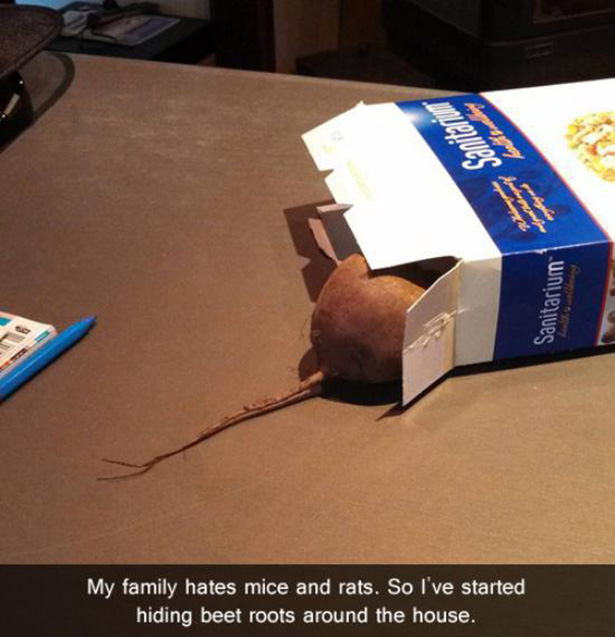 Beet-Rats-15 Pranks So Evil That They Are Actually Genius