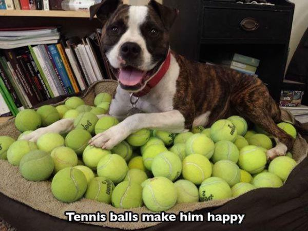 They Love Tennis Balls, Yay!-15 Images You Can Relate To If You Own A Dog