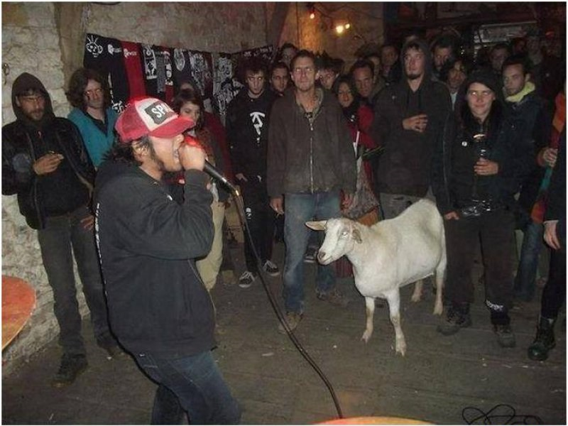 The sheep-15 Hilarious Concert Fails And Bloopers That Will Make You Lol