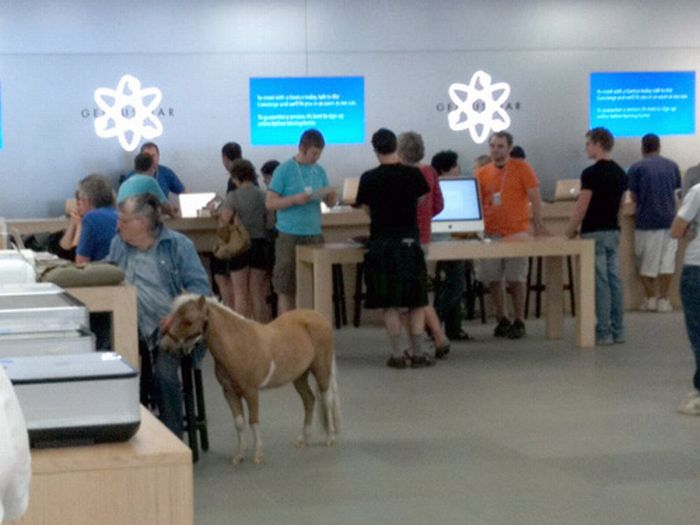 A Pony in Apple Store-15 Hilarious Things Ever Happened In Apple Stores