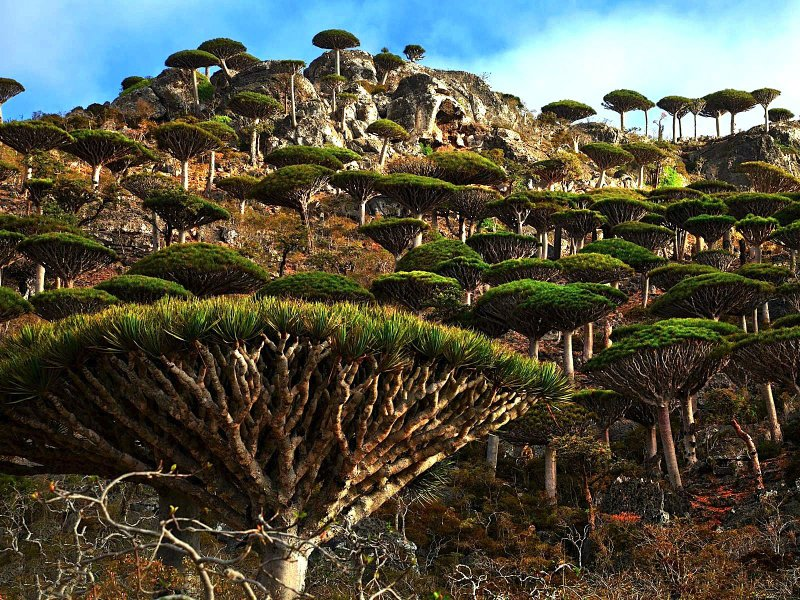 Dragon's Blood Tree-15 Things You Probably Don't Know About Harry Potter Movies