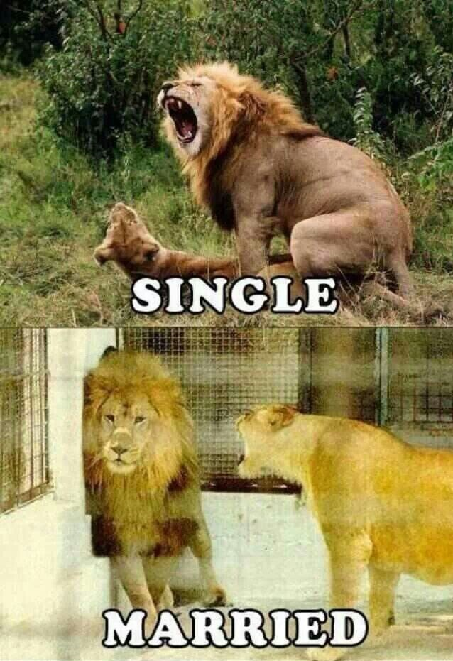 Lion at Work, Pussy at Home-15 Images That Show Striking Difference Between Single And Married Life