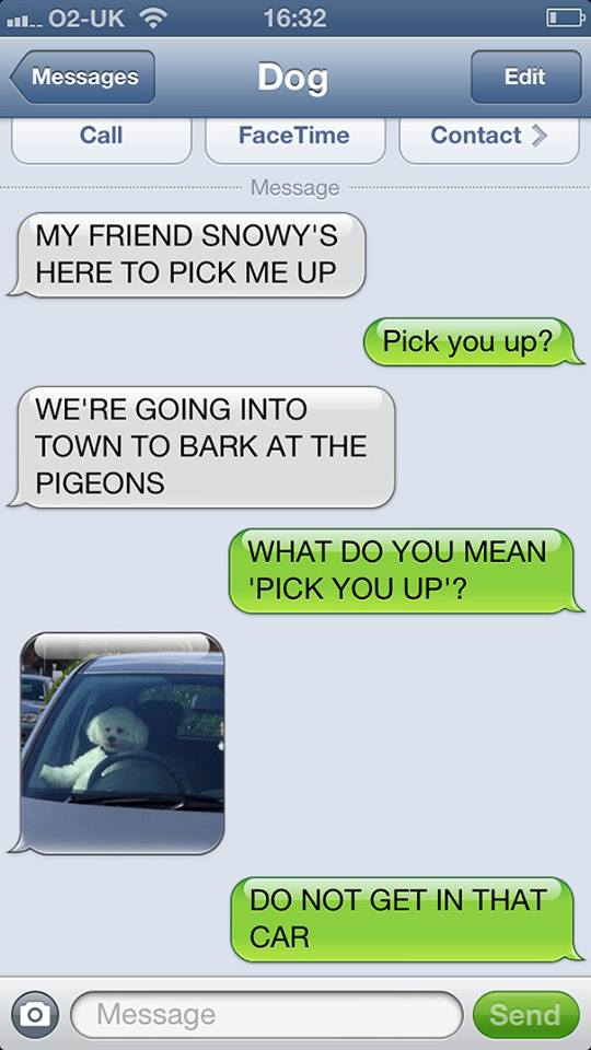 Classy Snowy Came in Her Sexy Car to Pick Her Friend up-15 Hilarious Dog Texts
