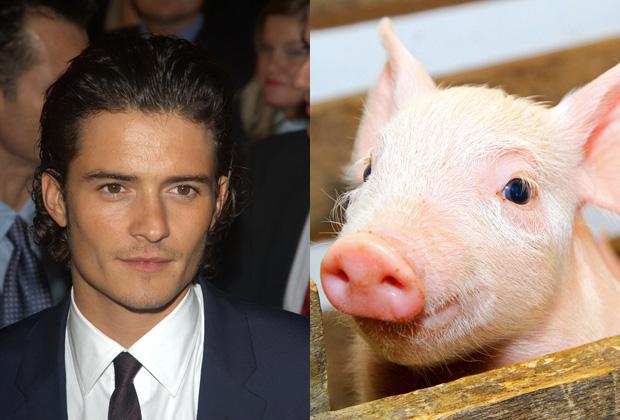Orlando Bloom – Swinophobia-15 Celebrities With Weird Phobias