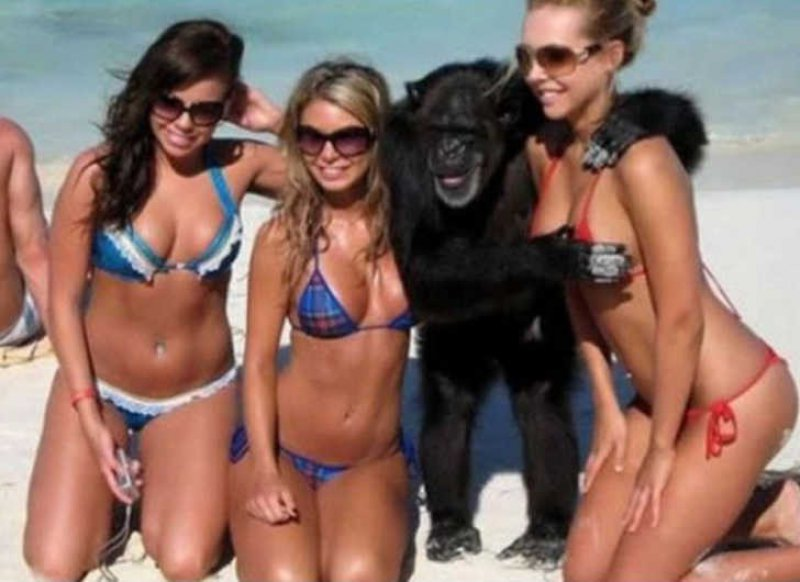 A Wild Chimpanzee Appears-15 Most Embarrassing Photos Ever Taken At Beach