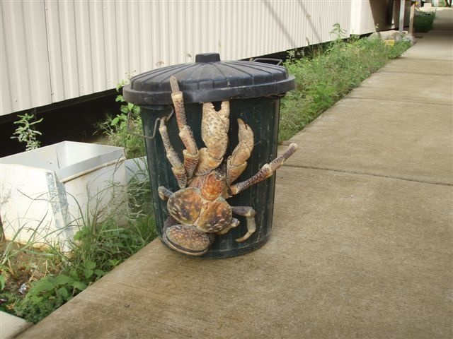 This Coconut Crab-15 Images That Look Fake, But Are Actually True
