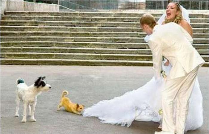 Dog man's best friend...-Hilarious Wedding Photos